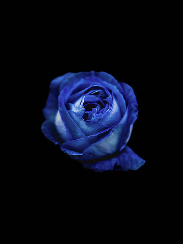 blue-flower-isolated.jpg